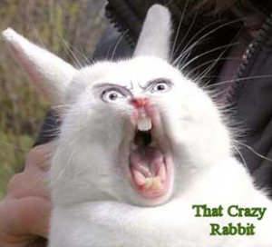 crazyrabbit